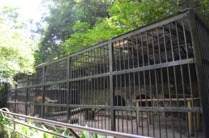 Ninety-seven year cage holds one lion that spends most of his time sleeping, said a zoo spokesperson. Photo by Shahrazad Encinias Vela