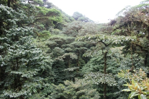 The canopy of the cloud forest