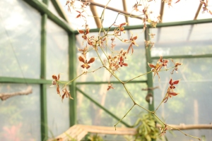 Delicate orchids inside a greenhouse at the Monteverde Orchid Garden